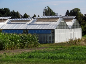 glass-houses-and-fields-2-1401332-m